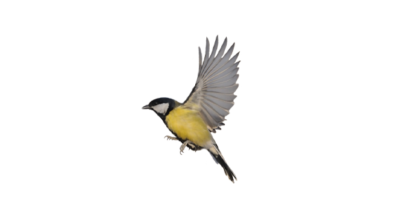 Vogel4_groß